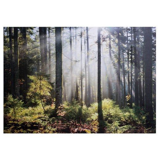PRINTS Forest Sunlight 100x140cm