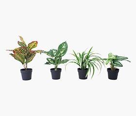 GULLEIF Artificial Plants