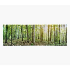 forest print wall art