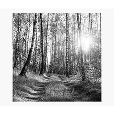 PRINTS Tree Light 120 x 120 cm