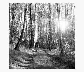 PRINTS Tree Light 120 x 120 cm