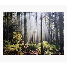 PRINTS Forest Sunlight 100x140cm