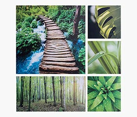 PRINTS Forest Canvas Print (Set of 5)