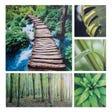 PRINTS Forest Canvas Print (Set of 5)
