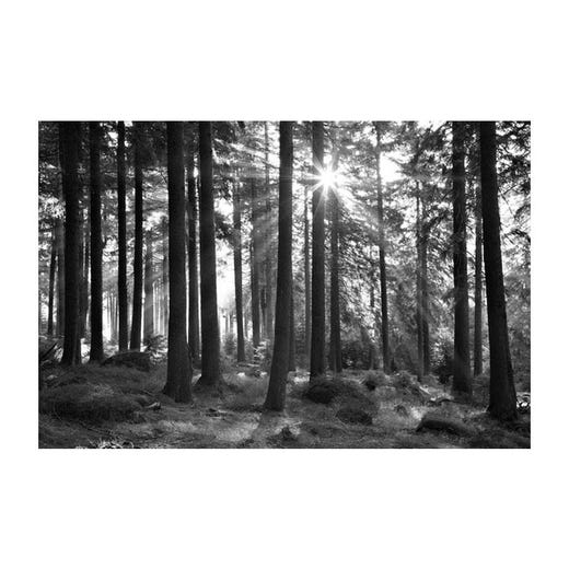 FOREST Trees Print